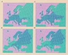 Kuva 1. A, B: Kuusi ja pyökki nykyisessä ilmastossa&#59; C, D: Kuusi ja pyökki lämmenneessä ilmastossa.